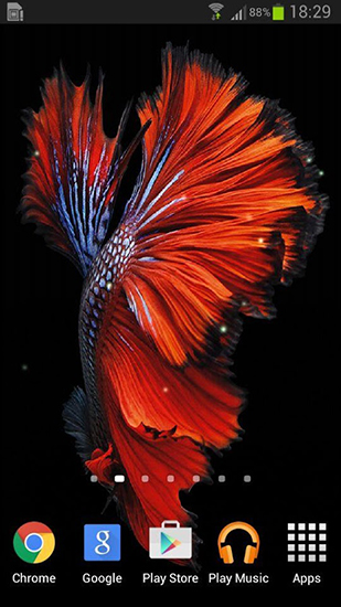 Betta Fish Live Wallpaper For Android Betta Fish Free Download For