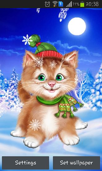 Winter Cat Live Wallpaper For Android Winter Cat Free Download For