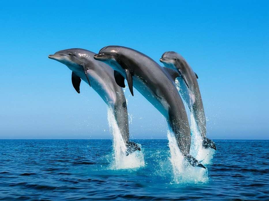 手机壁纸:动物, 水, 海豚, 海, #15135