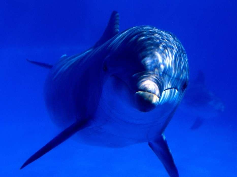 手机壁纸:动物, 海豚, #7264
