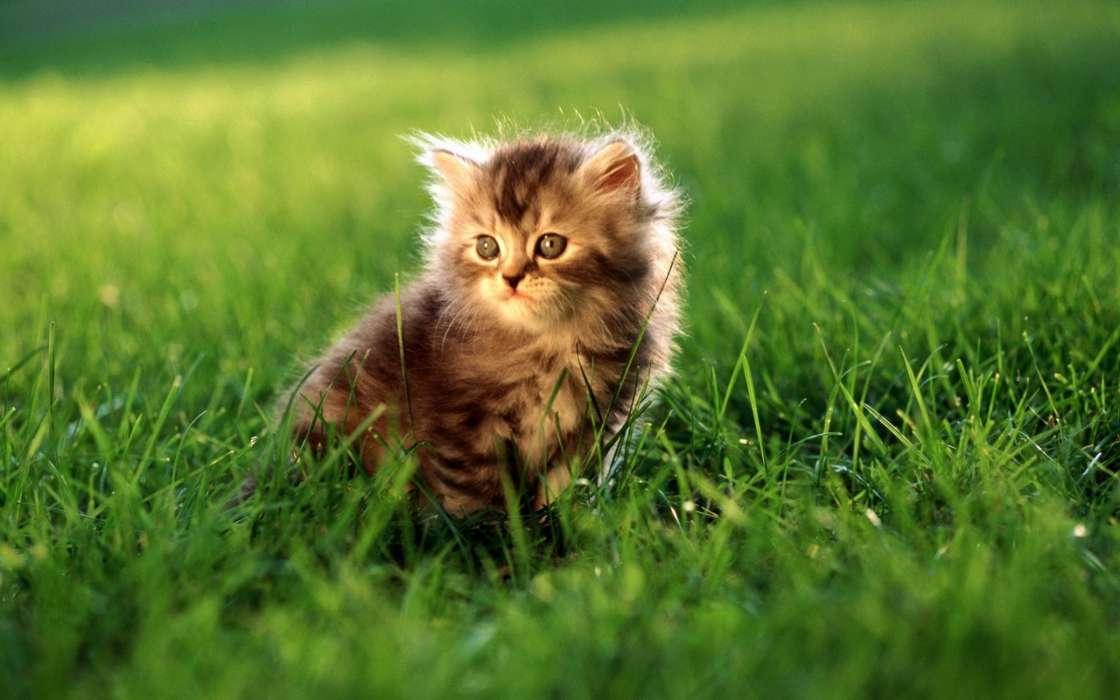手机壁纸:动物, 猫, 草, #9644