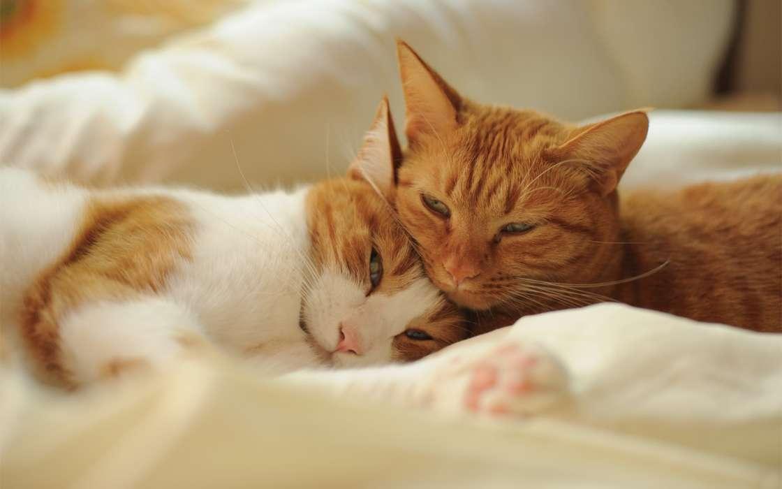 手机壁纸:动物, 猫, #23001图片