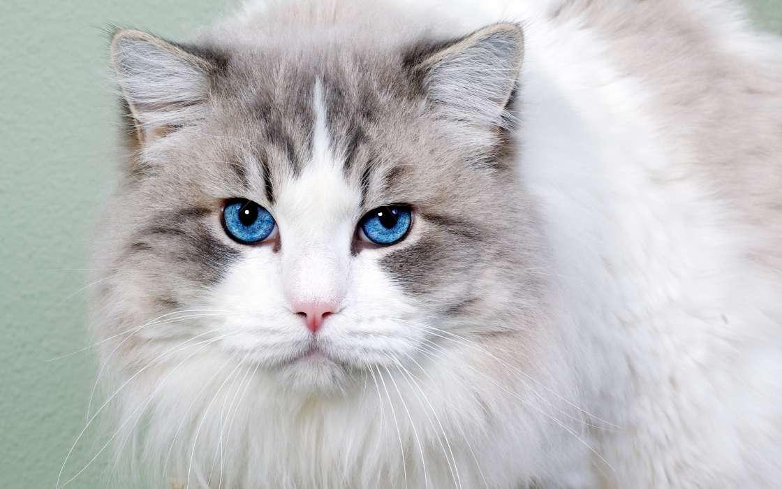 手机壁纸:动物, 猫, #26845图片