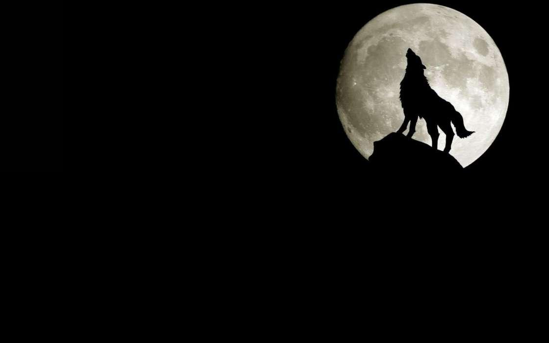 手机壁纸:动物, 狼, 月球, #12640