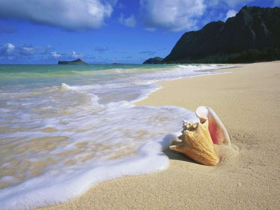 手机壁纸:景观, 海, 海滩, 壳, #26909