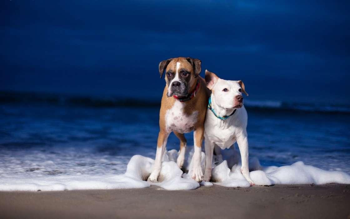 手机壁纸:动物, 狗, 海, #19256