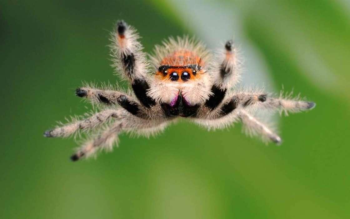 手机壁纸:动物, 昆虫, 蜘蛛, #26296