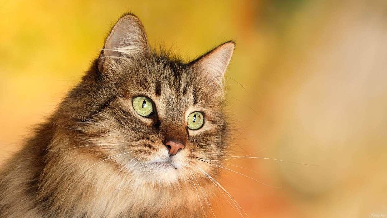 手机壁纸:动物, 猫, #28603图片