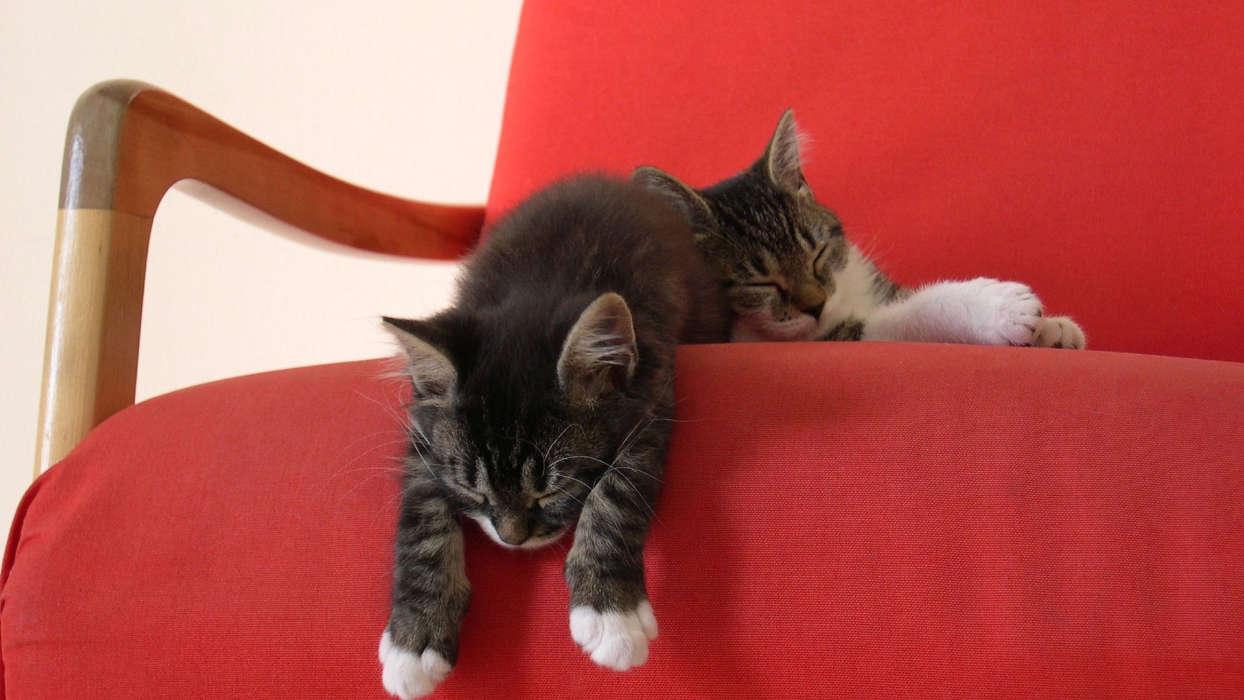 手机壁纸:动物, 猫, #29763
