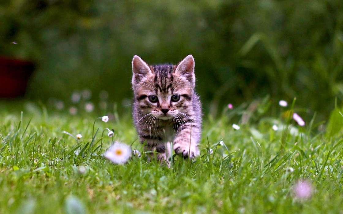 手机壁纸:动物, 猫, #32401