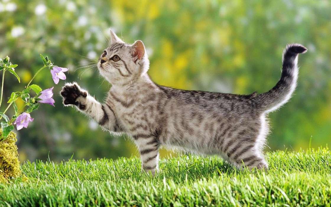 手机壁纸:动物, 猫, #34065