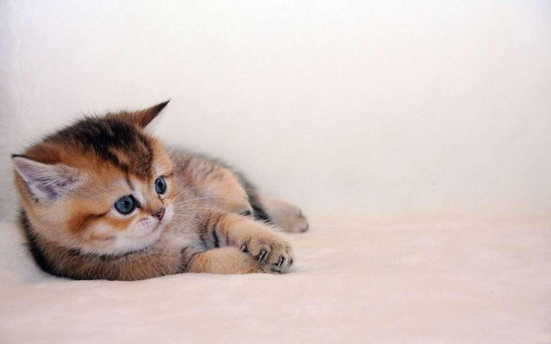 壁纸 动物 猫 猫咪 小猫 桌面 1120_700