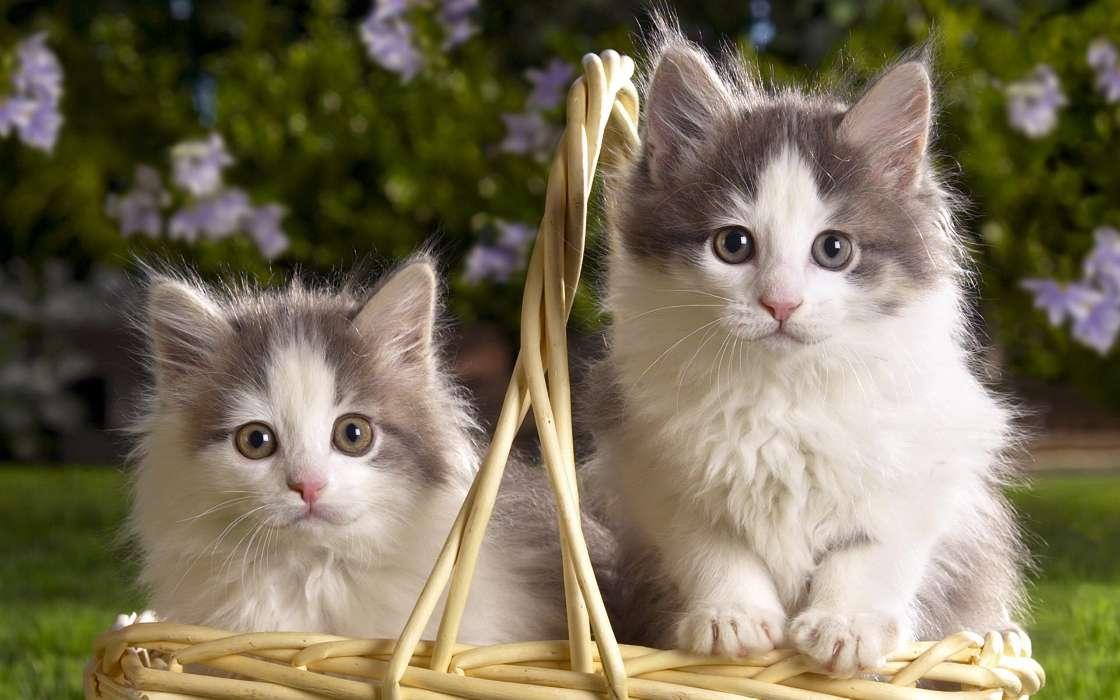 免费下载动物, 猫手机壁纸.