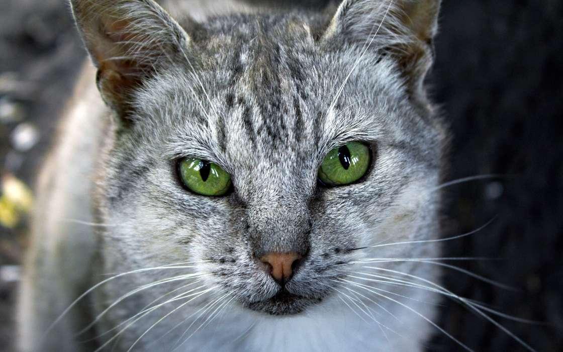 手机壁纸:动物, 猫, #46724图片