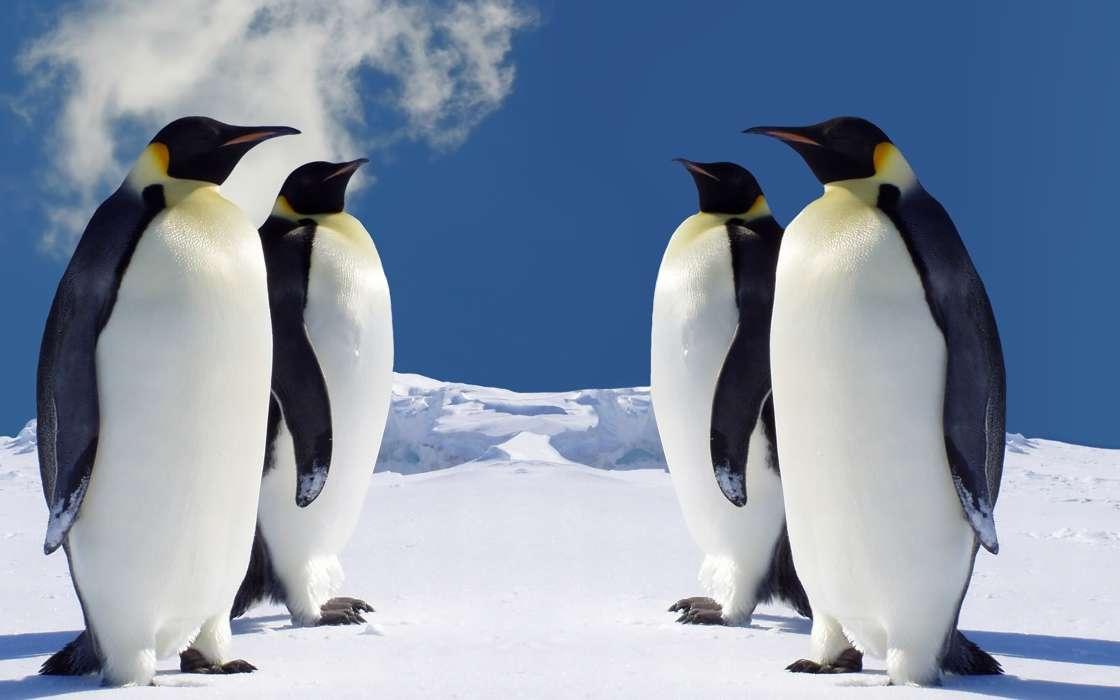 手机壁纸:动物, 鸟类, 企鹅, #35182
