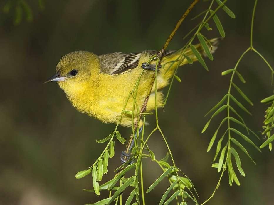 免费下载动物, 鸟类手机壁纸.