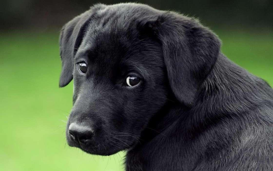 免费下载动物, 狗手机壁纸.
