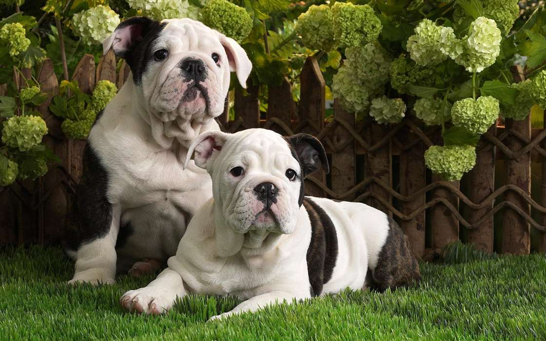 手机壁纸:动物, 狗, #30580