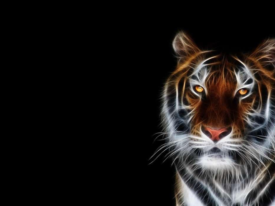 手机壁纸:动物, 老虎, #20147