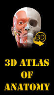 Download Muscle | Skeleton - 3D atlas of anatomy for Android - best program for phone and tablet.