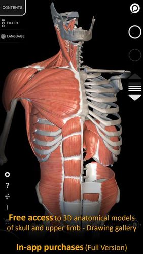Descargar gratis Muscle | Skeleton - 3D atlas of anatomy para Android. Programas para teléfonos y tabletas.