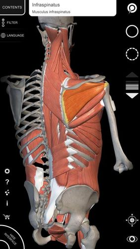 Muscle | Skeleton - 3D atlas of anatomy app for Android, download programs for phones and tablets for free.