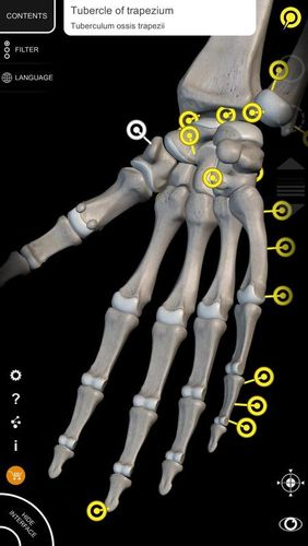 Screenshots of Muscle | Skeleton - 3D atlas of anatomy program for Android phone or tablet.