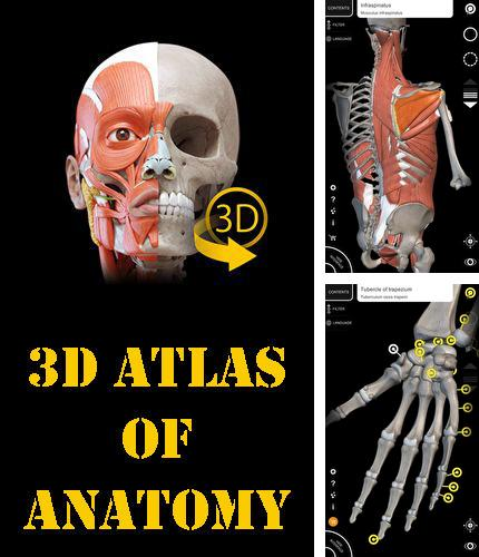 Besides Speaking clock: DV beep Android program you can download Muscle | Skeleton - 3D atlas of anatomy for Android phone or tablet for free.
