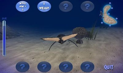 Humpback Whale screenshot 3