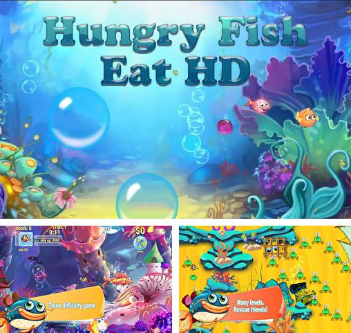 Hungry fish eat HD