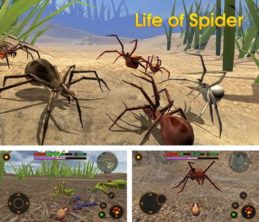 Life of spider