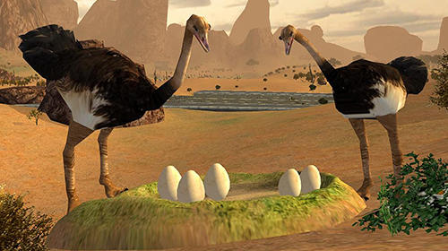 Jogue Ostrich bird simulator 3D para Android. Jogo Ostrich bird simulator 3D para download gratuito.