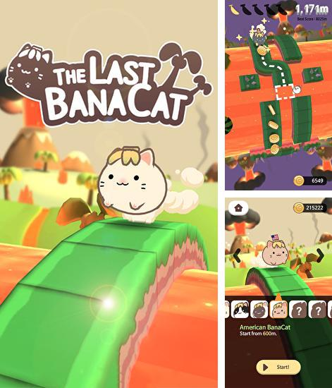 The last banacat