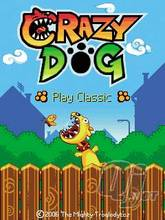 Download free mobile game: Crazy Dog - download free games for mobile phone.