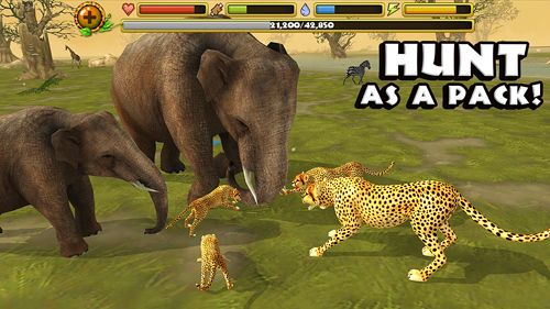 Screenshots of the Cheetah simulator game for iPhone, iPad or iPod.