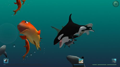 Screenshots of the I am dolphin game for iPhone, iPad or iPod.