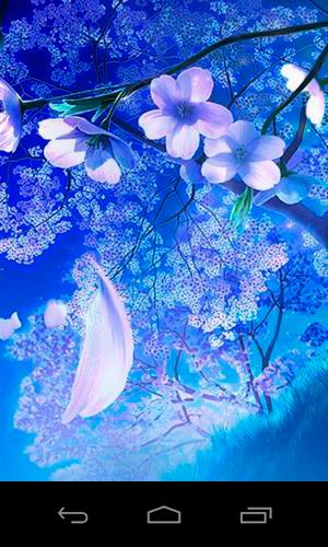 3D sakura magic live wallpaper for Android. 3D sakura magic free