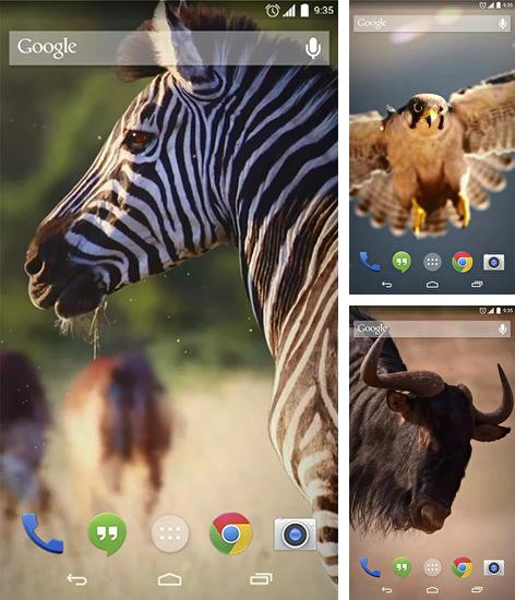 In addition to live wallpaper Fire by 4k Wallpapers for Android phones and tablets, you can also download African animals for free.