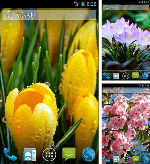 In addition to live wallpaper Cute love for Android phones and tablets, you can also download Amazing spring flowers for free.