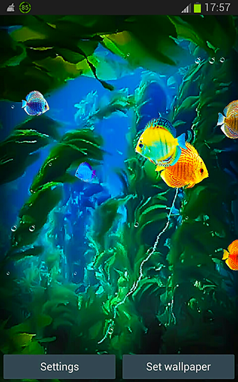 Download livewallpaper Aquarium 3D by Pups apps for Android. Get full version of Android apk livewallpaper Aquarium 3D by Pups apps for tablet and phone.