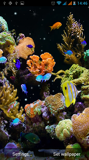 Download livewallpaper Aquarium by Best Live Wallpapers Free for Android. Get full version of Android apk livewallpaper Aquarium by Best Live Wallpapers Free for tablet and phone.