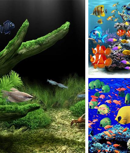 Baixe o papeis de parede animados Aquarium by Red Stonz para Android gratuitamente. Obtenha a versao completa do aplicativo apk para Android Aquarium by Red Stonz para tablet e celular.