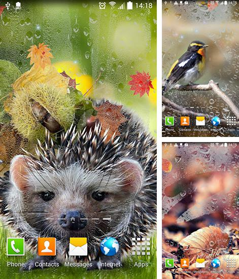In addition to live wallpaper Balls HD for Android phones and tablets, you can also download Autumn by Blackbird wallpapers for free.