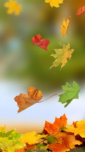 Download livewallpaper Autumn by Ultimate Live Wallpapers PRO for Android. Get full version of Android apk livewallpaper Autumn by Ultimate Live Wallpapers PRO for tablet and phone.