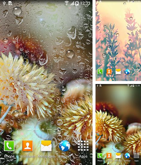 In addition to live wallpaper Circles for Android phones and tablets, you can also download Autumn flowers for free.