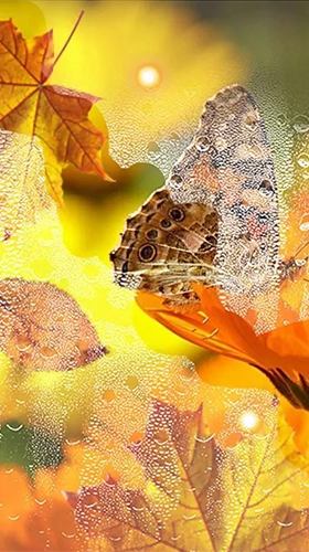 Download Autumn flowers by SweetMood - livewallpaper for Android. Autumn flowers by SweetMood apk - free download.