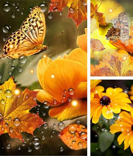 Kostenloses Android-Live Wallpaper Herbsblumen. Vollversion der Android-apk-App Autumn flowers by SweetMood für Tablets und Telefone.