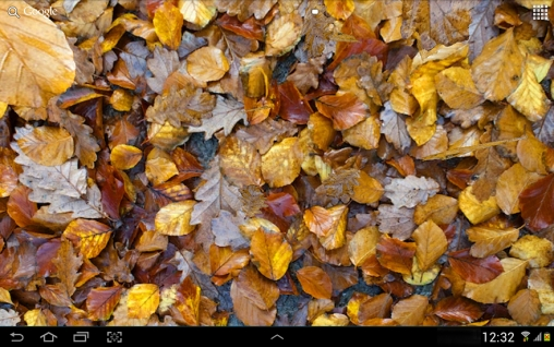 Download Autumn leaves 3D - livewallpaper for Android. Autumn leaves 3D apk - free download.