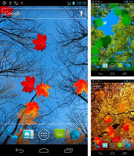 Download live wallpaper Autumn maple for Android. Get full version of Android apk livewallpaper Autumn maple for tablet and phone.