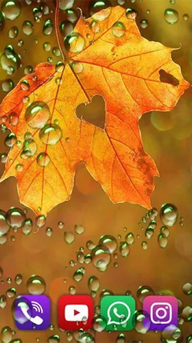 Download livewallpaper Autumn rain by SweetMood for Android. Get full version of Android apk livewallpaper Autumn rain by SweetMood for tablet and phone.